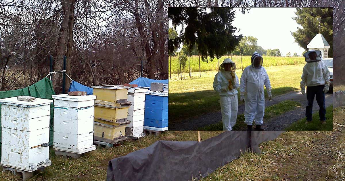 photo of Beehives and inset of Beekeepers